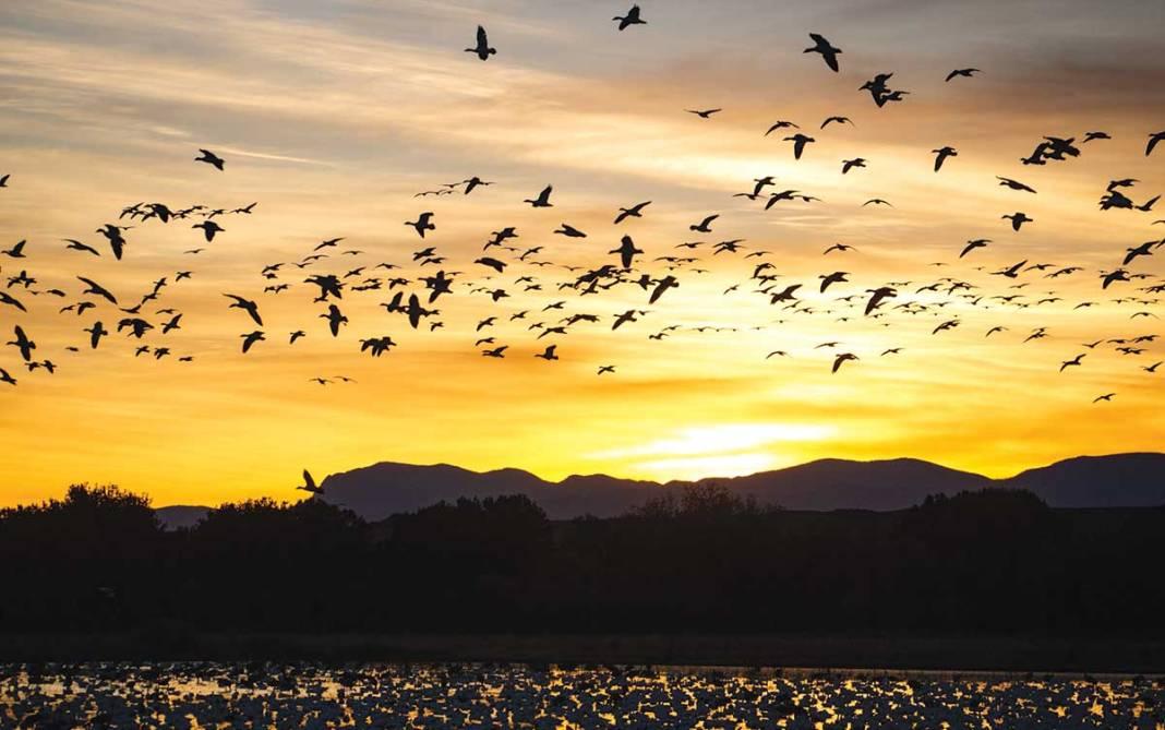 Sunset cranes at Bosque del Apache