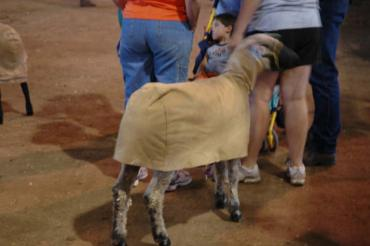 And while humans end up wearing wool sweaters and scarves, the sheep walk around in tacky canvas wraps.