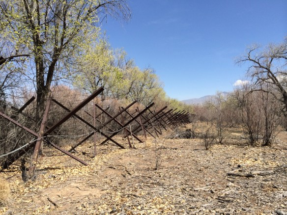 "Not sure what the x-shaped vegetation is in our ""we must preserve our natural Bosque"" but they haven't bloomed at all yet."