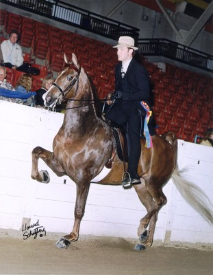 rkb-sizzle-saddle-chVP