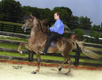 rkb-sizzle-saddle-left