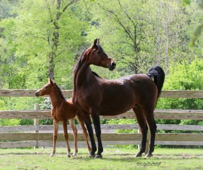 RRG Ms Promiscuous & Filly by Pot Of Gold