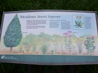 Interpretative Signage in the Meadow