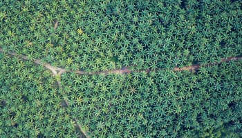 Palm Oil Plantations in Indonesia - New Naratif