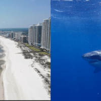 Video: Great White Shark Spotted In Orange Beach, Alabama Over The Memorial Day Weekend