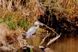 New Orleans Swamp Tours are great for  Bird Watching