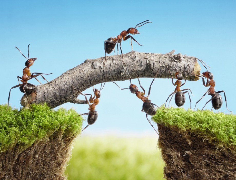 ants_working