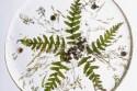rosliny las w słoiku