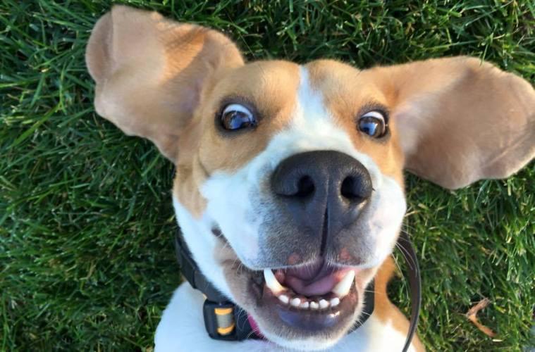 Tom Brady Scooby Selfie