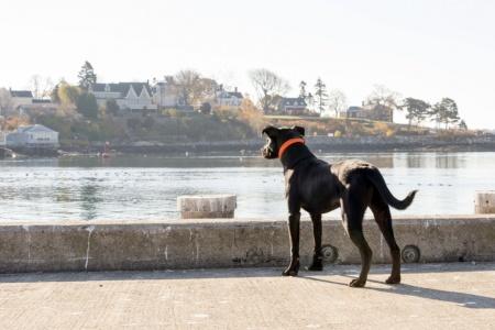 bruin coast guard dog