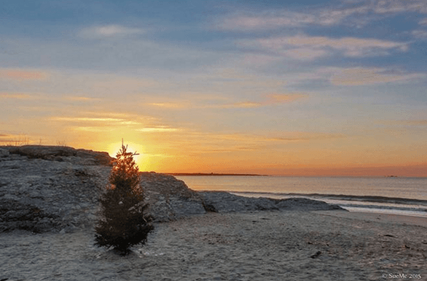 Silhouette of a christmas tree at sunrise against the background
