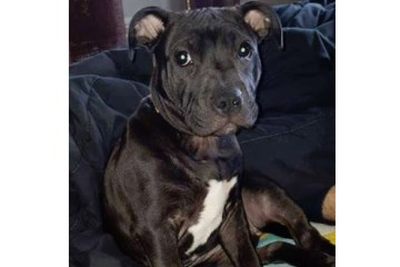 Santana Missing dog newport ri