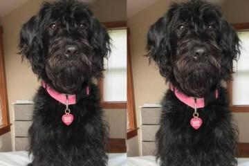 lola dog missing