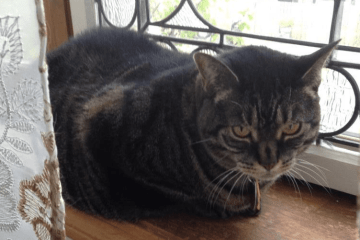 Twila Cat