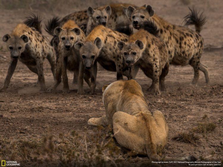 National Geographic Adam Zaff