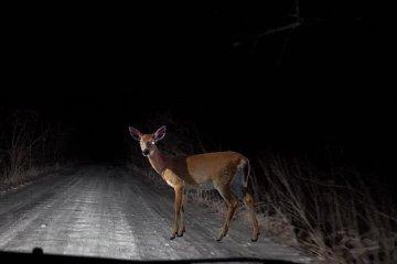 deer newport ri