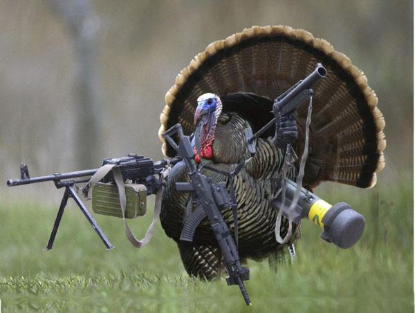 Rhode Island Turkey Hunting