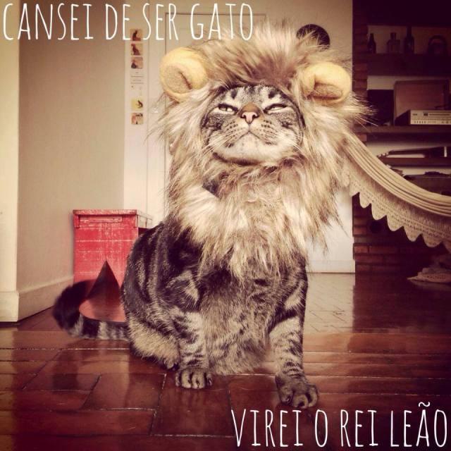 catsie3