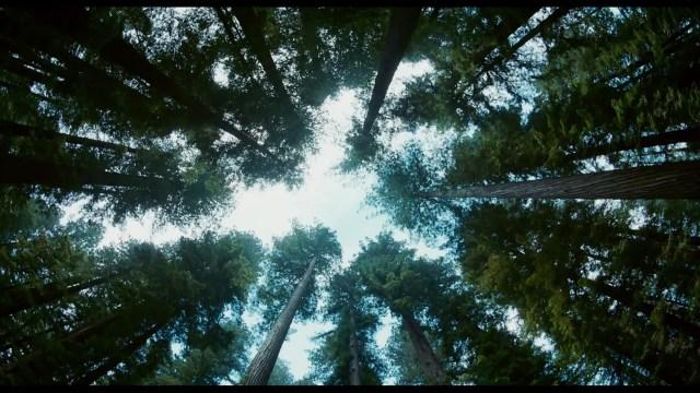 Tree-of-Life-003