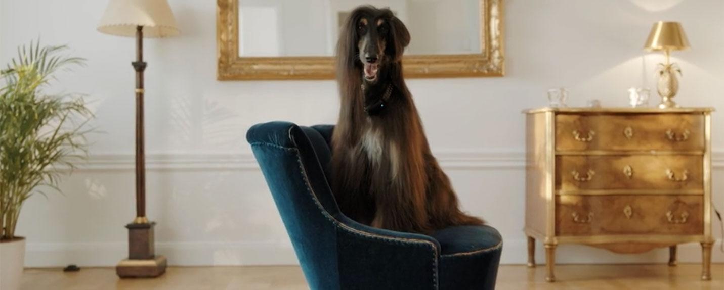 Telenor: Seu cachorro em todos os seus planos