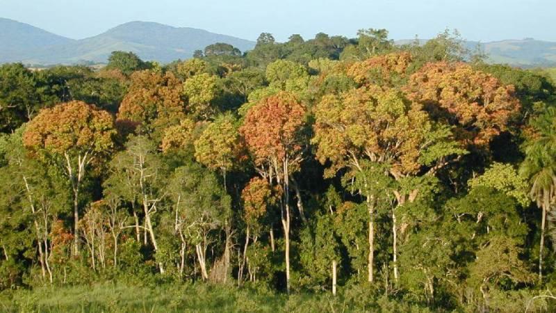 Африка может лишиться своих тропических лесов