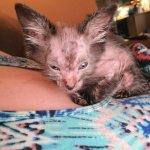 Девушка пригрела у себя дома настоящую «кошку-обортня»: холодный взгляд и новая шерсть