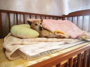 イヌ ベッド 画像