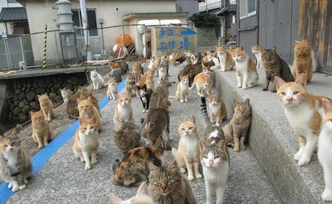 愛媛・大洲市の青島。ネコの楽園