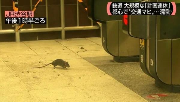 渋谷 ネズミ 大量発生