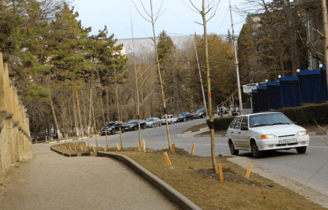 В Кисловодске высадили древнейшие деревья гинкго билоба