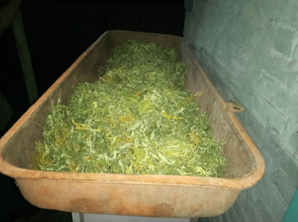 В Труновском районе выявлен факт незаконного хранения наркотических средств