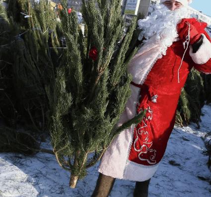 В Кисловодске станет меньше ёлочных базаров