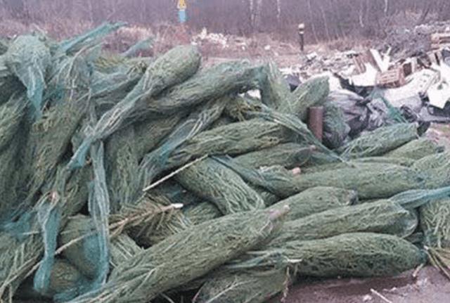 В Москве продавцы завалили улицы нераспроданными ёлками