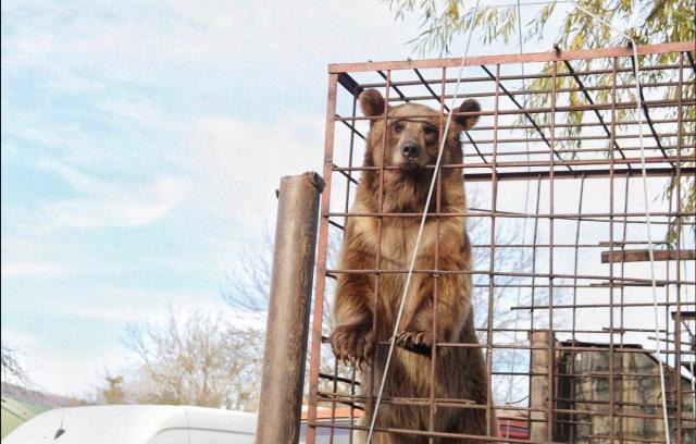 Медведь вырвался из вольера и напал на ребенка в Адыгее