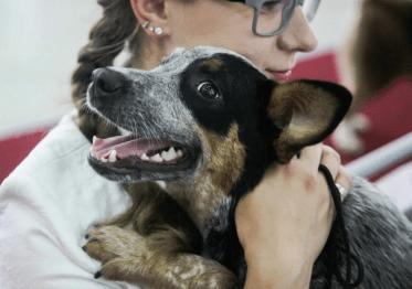 В Якутске хотят ввести налог для владельцев собак