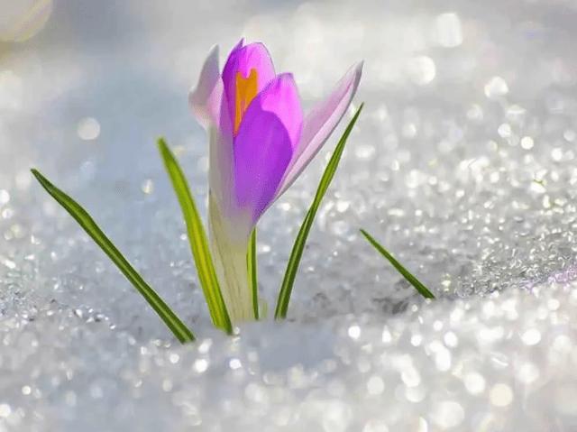 Весна вновь не жалует Ставрополье