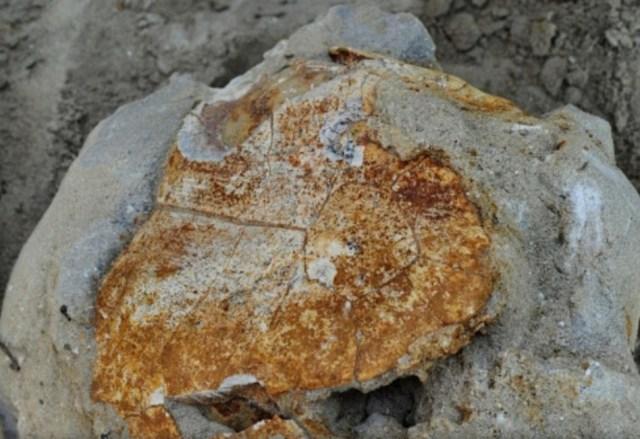 Ученые обнаружили останки древней черепахи под Ставрополем