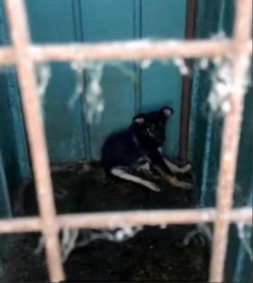 Краевая прокуратура проверит работу питомника в Георгиевске