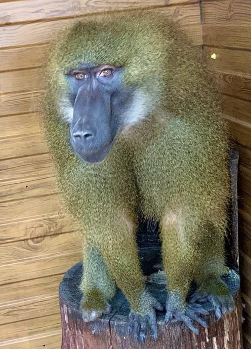 Новый обитатель поселился в зоопарке Ставрополя