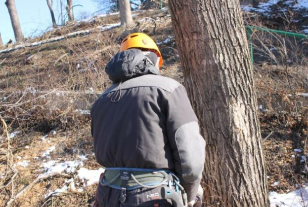 Склон в центре Кисловодска освобождают от сухих деревьев