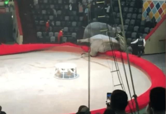 Зрителей цирка напугали подравшиеся слоны в Казани