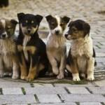 В Ставропольском крае приняли закон о защите бездомных животных