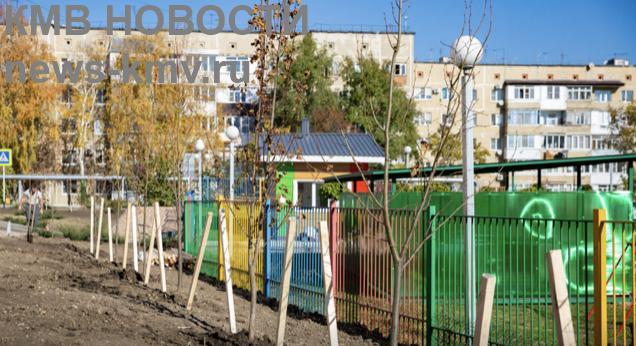 Больше 200 деревьев и кустов высадили около детсада в Ставрополе