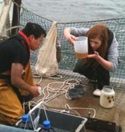 Dr%20Gemma%20Cripps%20with%20Prof%20Kam%20Tang,%20studying%20zooplankton%20in%20Swansea%20Bay%20C