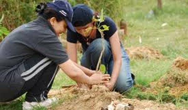 Plantări de arbori