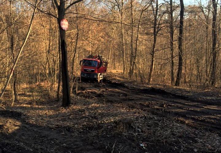 Pădurea din Dealul Mărului se fură… ca-n codru