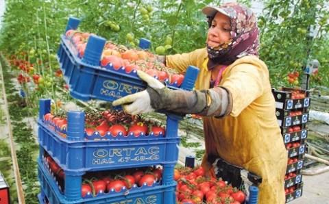 Турецкие фермеры готовятся к худшему