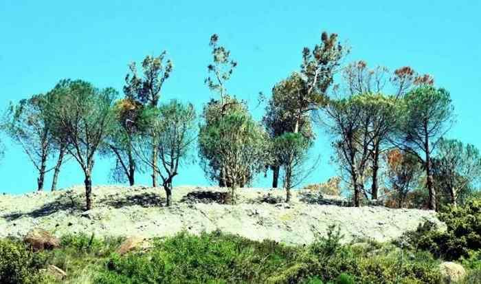 Покрасить сухие деревья в зеленый цвет? Гениально!