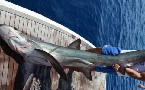 5-метровая акула у берегов Анталии