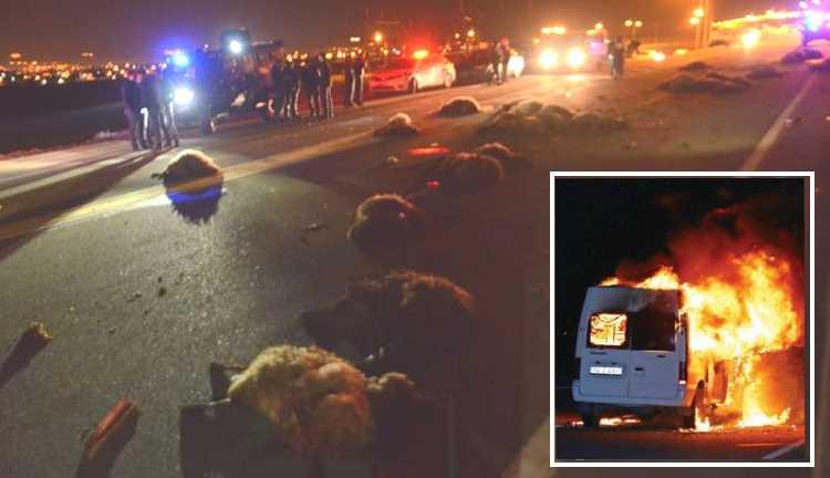 42 мертвых овцы, 4 пострадавших и сожженный микроавтобус